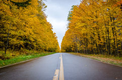 Golden road Royalty Free Stock Photo