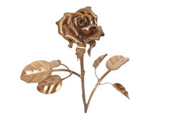 Golden rose. The photo of beautiful iron rose on white background Stock Photos