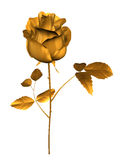 Golden rose Stock Images