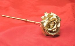 Golden rose. Over a red background stock photos