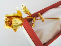 Golden rose Stock Photo