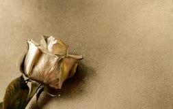 Golden rose on golden background Royalty Free Stock Photo