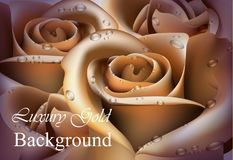 Golden Rose flower close up Vector realistic background. 3d illustration delicate colors. Golden Rose flower close up Vector realistic background. 3d Stock Photos