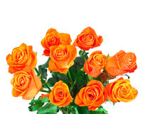 Golden roses Stock Image