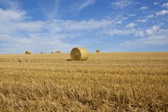 Golden round bales Royalty Free Stock Images