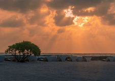 Golden run rays at Sunrise on Sea - Sun beds - tree Royalty Free Stock Image