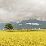 Golden rural scenery Stock Photo