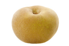 Golden russet apple Royalty Free Stock Photo