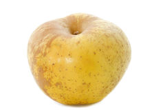 Golden russet apple Stock Photography