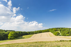 Golden Rye Field And Hill Royalty Free Stock Photo