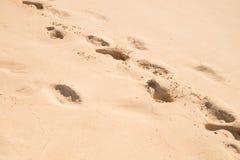 Golden sand beach Stock Images