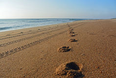 A Golden Sand Beach in The Outer Banks of North Carolina. A set of footprints and tire tracks can be seen on a golden sand beach in Duck, North Carolina stock photography
