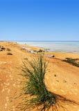 Golden sand beach. Royalty Free Stock Image