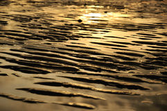 Golden sand dune beach Royalty Free Stock Photos