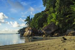 Dig at a beautiful paradise beach on the seychelles 1. Golden sand, granite rocks, a dog and palm trees at a beautiful idyllic paradise beach on the seychelles Royalty Free Stock Photo