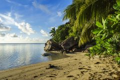 Dig at a beautiful paradise beach on the seychelles 4. Golden sand, granite rocks, a dog and palm trees at a beautiful idyllic paradise beach on the seychelles Royalty Free Stock Images