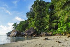 Dig at a beautiful paradise beach on the seychelles 5. Golden sand, granite rocks, a dog and palm trees at a beautiful idyllic paradise beach on the seychelles Stock Images