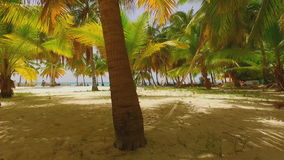 The golden sandy beach and green palms. The golden sandy beach and green palm trees view from below stock video footage