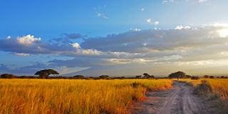 Golden savannah road Royalty Free Stock Image