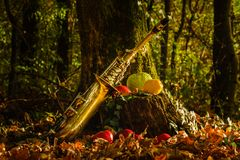 Golden saxophone in the forest, Autumn colors in the woods royalty free stock images