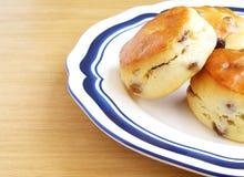 golden scones sultana Στοκ εικόνα με δικαίωμα ελεύθερης χρήσης