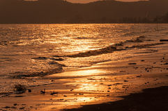 Golden sea and beach Stock Images