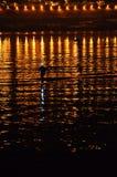 Golden sea. Light people qingdao Stock Photography
