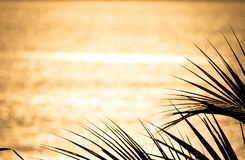 Golden sea surface and coconut palm stock photo