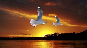 Golden seagull Ocean Sunset. Original exclusive photo art. Two seagulls in full flight with a Striking Orange Sunrise Over Water with storm cloud. Original Stock Photo