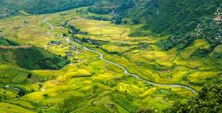 Golden season on valley Tu Le, Yen Bai, Vietnam Stock Photography