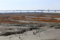 Golden seaweed, the nets in the tidal flat, the longest bridge in the world. Winter, golden seaweed in wetland, is the longest bridge in the distance Stock Photo