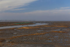Golden seaweed, the nets in the tidal flat, the longest bridge in the world. Winter, golden seaweed in wetland, is the longest bridge in the distance Stock Image
