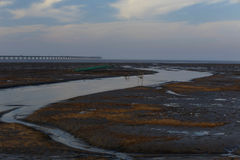Golden seaweed, the nets in the tidal flat, the longest bridge in the world. Winter, golden seaweed in wetland, is the longest bridge in the distance Royalty Free Stock Image