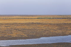 Golden seaweed, the nets in the tidal flat, wetlands in the winter. The tide goes out, revealing river and fishing nets Stock Photos