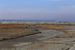 Golden seaweed, the nets in the tidal flat, the world's longest cross-sea bridge - hangzhou bay bridge Stock Photo