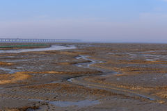 Golden seaweed, the nets in the tidal flat, the world's longest cross-sea bridge - hangzhou bay bridge. Winter, golden seaweed in wetlands and river, is the Royalty Free Stock Photography