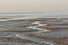 Golden seaweed, the nets in the tidal flat, the world's longest cross-sea bridge - hangzhou bay bridge Stock Images
