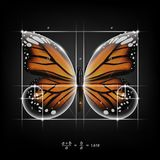 Golden section ratio, divine proportion and golden spiral on monarch butterfly vector illustration Stock Photo