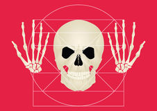 The golden section of the skull on a red background Stock Photos