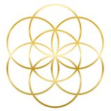 Golden Seed Of Life Flower Of Life. Golden Seed of Life. Precursor of Flower of Life symbol. Unique geometrical figure, composed of seven overlapping circles of royalty free illustration