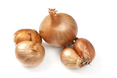 Golden Shallots Stock Images