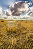 Golden sheaf of hay at summer Stock Photography