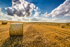 Golden sheaf of hay at sunny day Royalty Free Stock Photography