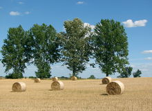 Golden sheaves of hay Royalty Free Stock Photos