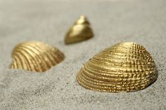 Golden Shells Royalty Free Stock Photos