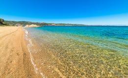 Golden shore in Cala dei Ginepri Stock Image