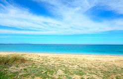 Golden shore and green plants in Fiume Santo Stock Image