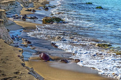 Golden shore and rocks in Castelsardo Stock Photography