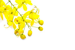 Golden shower(Cassia fistula) Stock Photo
