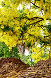 Golden shower flower with Ancient wall of Chiangmai Royalty Free Stock Image